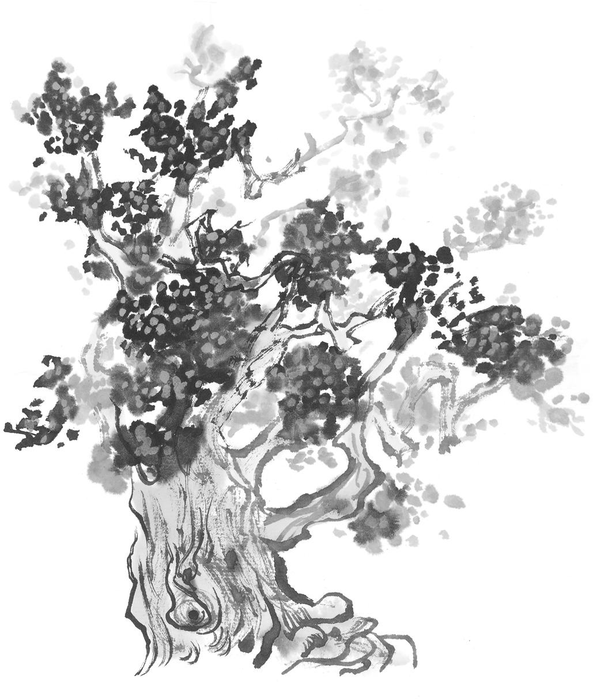 发财树怎么浇水